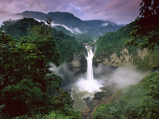 Amazon Rainforests Amazonia South America