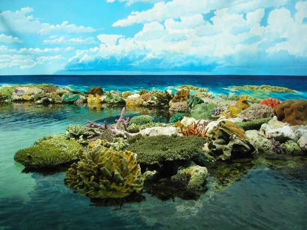 Great Barrier Reef coral outside